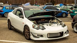 Acura RSX Great White Shark