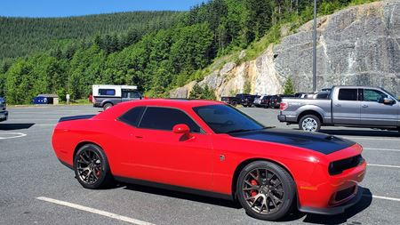 Dodge Challenger Just Cat