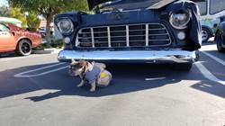 Paws for a Cause Car Show 2018
